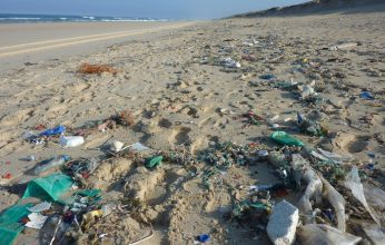 Beach_Clean_Up-346x220.jpg