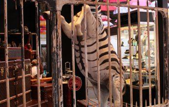 Art-Style_Zebra-346x220.jpg
