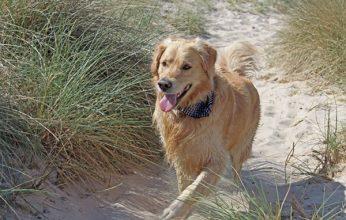 Hunde_Nebensaison-346x220.jpg