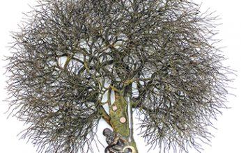 Umweltbaum-346x220.jpg