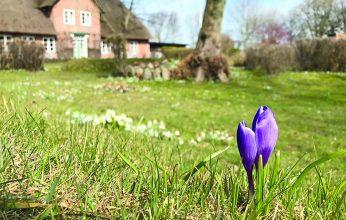 Titel_Frühling-346x220.jpg