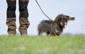 Landesjadgverband-Anleinpflicht-Hunde-©Sebastian-Grell-346x220.jpg