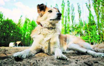 Hundstage-346x220.jpg