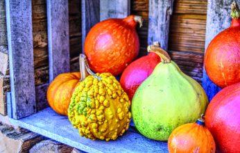 pumpkin-3822133_1920-346x220.jpg