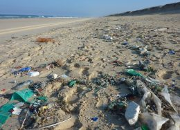 Beach_Clean_Up-260x188.jpg